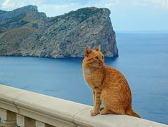 Cat on top of the world (Kai Beinert) Tags: cat katze mallorca island balearen baleares tier animal animals katzen cats cap formentor cabo meer sea seaside insel sommer