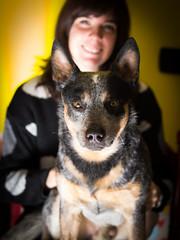 P2117454 (zullo_stefano) Tags: light dog pet animal animals olympus australiancattledog zuiko acd e5 workingdog zuiko50mm australiandog zuiko50mmmacro australianworkingdog
