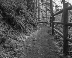 Silver Falls Fence (Willamette Valley Photography) Tags: trees blackandwhite white black nature monochrome oregon forest fence outside outdoors woods hiking path trails fences olympus hike trail pacificnorthwest fencing paths silverfalls