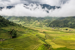 Landscape in northern Vietnam (David P Hughes) Tags: green landscape countryside rice hills vietnam huts tiers paddyfields