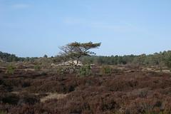 Schoorl (bas.mohr) Tags: bergen duinen castricum pwn schoorl kennemer duinreservaat noordhollandse