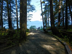 A Walk In the Tall Pines (Herculeus.) Tags: trees plant tree water alaska pine forest bench landscape island moss shadows outdoor trails ak pines insidepassage conifer pathways hoonah 5photosaday mottledlight icypoint