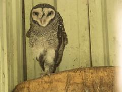 IMG_8348 (Bill Jelen) Tags: sydney bluemountains 3sisters barkingowl echomountain