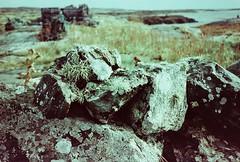 ireland, october 2014 (kodacolorframes) Tags: travel ireland film moss europe expired yashicat4 ferraniasolarisfgplus100