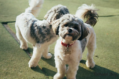 DAYCARE CARDIFF ACTION PETZ (Action Petz!) Tags: park uk dog dogs wales puppies south cardiff canine bark daycare dogpark dogphotography doggydaycare dogdaycare dogfun actionpetz