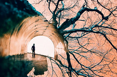 -between time and space (Hodaka Yamamoto) Tags: park winter tree film silhouette lomo lca lomography doubleexposure turquoise surreal tunnel double lomolca multipleexposure filmcamera doubles multiexposure filmphotography