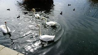 Λιμνη Καστοριας DSC00814 ( Explore )