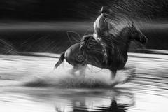 Riscos da gua (Marco Abud) Tags: sunset horse vertical natureza bio salinas prdosol formas biology rider saline cavalo pantanal salina matogrossodosul biologia horseman biome riscos 2016 cavaleiro peo pantaneiro bogtrotter aquidauana bioma pantanalsul fazendabarramansa aquidauanams marcoabudfotografia marcoabud tel11983831978 formasdagua riscosdagua caminhosdagua