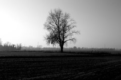 L'albero del campo. (Ondeia) Tags: bw italy white black milan tree contrast italia loneliness milano bn campagna albero bianco nero tristezza solitudine milanese settimo
