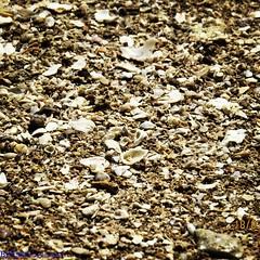 نظره عن كثب على رمال جزيرة مسكان. #رمال #جزيره_مسجان #طبيعه #قواقع (Esra Ben Jassem) Tags: رمال طبيعه قواقع جزيرهمسجان