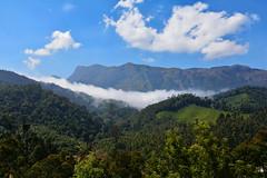India - Kerala - Munnar - Top Station - 214 (asienman) Tags: india kerala munnar topstation asienmanphotography
