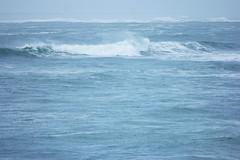 Ile d'Oléron (Kusanar_NX) Tags: ocean ile plage charente mouette oiseaux oléron nx500