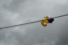 (Antonio_Trogu) Tags: sky italy balloons italia ballon streetphotography cable cables catch emiliaromagna romagna entangled 2016 catched entangle santarcangelo antoniotrogu nikond3100