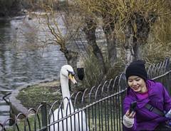 Mute swan selfie (julesnene) Tags: travel england london unitedkingdom buckinghampalace gb stjamesspark muteswan selfie cygnusolor stjamessparklake julesnene juliasumangil canon7dmarkii canon7dmark2