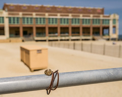 Fightin' Texas Aggie Rings at the Jersey Shore (flickr4jazz) Tags: us newjersey unitedstates asburypark