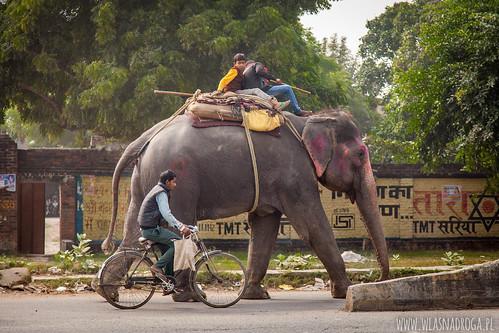Słoń w mieście