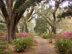 The Path (KaDeWeGirl) Tags: park santa house green beach gardens garden state florida path rosa eden wesley