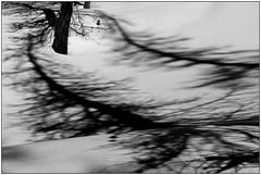 Ombre lunghe - Long shadows (Matteo Bersani) Tags: winter shadow snow tree ombra neve albero inverno ayas valdaosta a58 resy montagnamountain sonyalphaitalia bwbwbnblackwhitebianconero