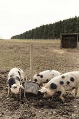 _MG_1942 (Anders Hviid) Tags: jens der bord fra til kan hvor ane jord kort blive landbrug muld bunden muldpaanettet speciallandbrug