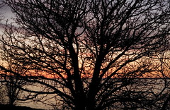 When will spring arrive? (klauslang99) Tags: county trees sunset lake ontario canada nature landscapes prince edward northamerica naturalworld klauslang
