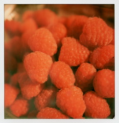 Raspberries (tobysx70) Tags: california ca red toby color film closeup set fruit project lens polaroid sx70 photography for la los berry angeles bokeh mint canyon hills tip cameras hollywood type raspberry instant sonar hancock raspberries impossible beachwood rubus the closeuplens idaeus impossaroid