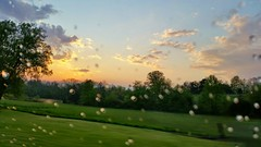 Sunset after the rain..April 2015 (no filter or edit) (kristie1elise) Tags: sunset nature rain landscape tennessee raindrops