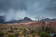 0330 IMG_3193 (JRmanNn) Tags: mountains rain lasvegas scenic deadtree rainclouds redrockoverlook