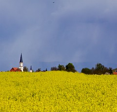 Church Behind the Yellow (Explore) (Canon50D1) Tags: bayern spring cool afternoon cloudy explore fields multiple brightcolors apr 2016 scenerylandscapes flowersbushesleaves
