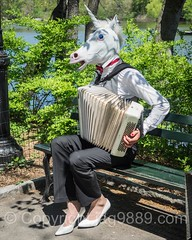 Unicorn Musical Performer, Central Park, New York City (jag9889) Tags: park nyc newyorkcity musician horse usa ny newyork animal bench weird spring artist unitedstates outdoor centralpark manhattan text unitedstatesofamerica streetphotography landmark accordion luggage cp creature performer unicorn thelake nycparks 2016 publicpark newyorkcitydepartmentofparksrecreation jag9889 20160424