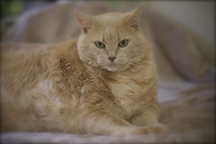 Lupita (Rita Petita) Tags: feline explore lupita furrylane