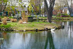 Island in the park! (ineedathis, Keep on Ticking!) Tags: flowers houses newyork bird cars water grass fence reflections bench landscape island geese pond rocks babies tulips huntington entrance longisland swans turtles aquatic avian muteswans heckscherpark nikond750