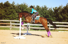 (suzcphotography) Tags: horse animal sport canon 50mm jump jumping grove outdoor gray riding hunter clover gables equestrian thoroughbred equine t3i