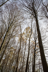 DSC00018.jpg (elmayimbe) Tags: de deutschland europa pflanzen aachen baum nordrheinwestfalen schneeberg buche objektive takumar3524mm