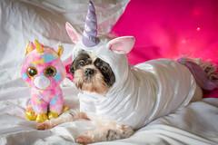 Rainbows and Unicorns (Beth in NorCal) Tags: arty dressedup unicorn ddc lof 20160113