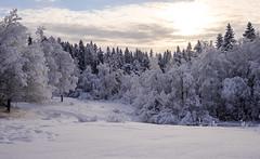DSCF6076.jpg (A.Husvaer) Tags: norge norway drammen konnerud