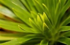 Planta (Rita Barreto) Tags: verde planta jardim paisagismo jardinagem