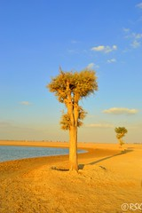Lone tree (RSK.2016) Tags: travel blue shadow sky lake plant tree beach nature water landscape sand outdoor places explore shore lone manmadelake alqudra