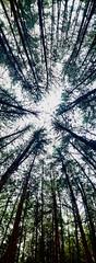 (CCONCHAB) Tags: naturaleza rboles pointofview bosque cielo panormica