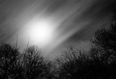moving clouds (SopheNic (DavidSenaPhoto)) Tags: longexposure trees blackandwhite bw moon monochrome night clouds iso400 35mmfilm hp5 ilford selfdeveloped id1111 canonelan7e