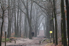If the forest could talk ... (RW-V) Tags: trees winter dog chien forest walking bomen woods hiver hond arbres hund bos wald fort apeldoorn woud 2000views 2500views 100faves baumen 200faves 150faves 80faves orderbos 120faves 250faves 175faves canonef100mmf28lmacroisusm canoneos70d