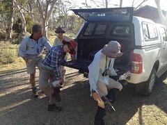 Hawkweed hygeine protocols (Environment + Heritage NSW) Tags: volunteers volunteer hawkweed kosciuszko kosciuszkonationalpark mouseearhawkweed mouseear volunteerprogram weedcontrol weedmanagement weedvolunteerskosciuszkonationalpark weedprogram hawkweederadiction