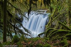 Upper Butte Creek Falls (Ulrich Burkhalter) Tags: mountains oregon forest waterfalls buttecreek icywaterfalls