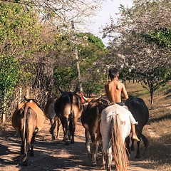 Young bull herding the bulls. Nicaragua has been phenomenal so far, a huge weight lifted once I crossed the border, feel very secure. #theworldwalk #travel #nicaragua