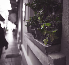 green vs grey (KostasTsiaousis) Tags: plant color green contrast bokeh gray pot faded thessaloniki matte selective