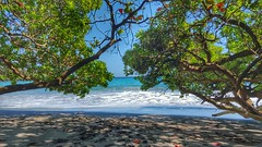 Shady Spot on Hamoa Beach (BnGphotos) Tags: travel vacation seascape beach landscape hawaii maui east hana shore loki beaches roadtohana hamoabeach mauihawaii
