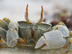 Zanzibar 2015 (hunbille) Tags: texture beach tanzania hotel crab zanzibar pongwe cy2 challengegamewinner pongwebeachhotel
