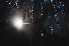 (nic lawrance) Tags: trees light sun nature woodland dark shadows shine cotswolds gloucestershire corona shape