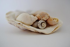Shells (hcorper) Tags: shells highkey fotosondag fs160207 116in201613shells