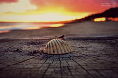 Firey shells (beachaddictphotography) Tags: ocean wood uk pink sunset red sea sky colour beach field yellow clouds gold sand nikon focus dof shell shore dorset groyne bournemouth depth boscombe d5500