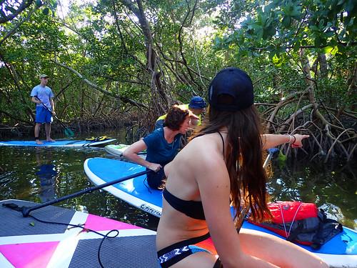 2_17_16 Kayak Paddleboard Tour Sarasota FL 08